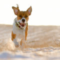 dog-running-on-the-sand-wide
